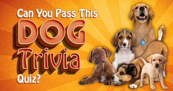 Can You Pass This Dog Trivia Quiz?