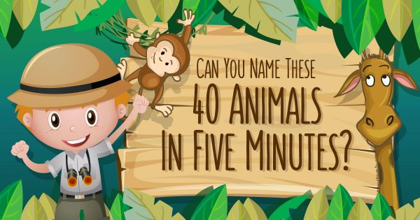 Can You Name These 40 Animals In Five Minutes?🐅🐫🐑🐢🐋