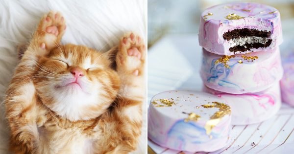 🐱 Choose Between Kittens And Desserts And We'll Pay You A Compliment 🍰