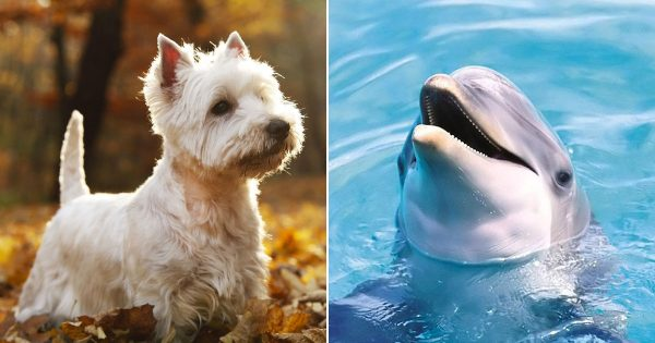 Can We Guess Your Favorite Animal Based On These Strange Questions?