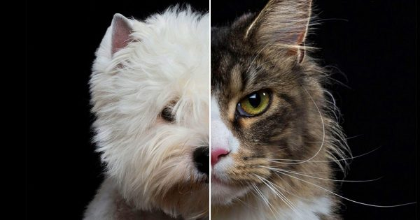 🐶 Everyone Is A Combo Of One Dog Breed And One Cat Breed — What Are You? 🐱